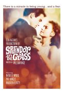 Poster of SPLENDOR IN THE GRASS in 35MM